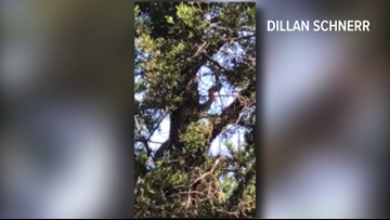 Texas hunter captures video of large snake scaling tree