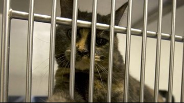 161 cats, 15 dogs seized from Buda residence in animal cruelty investigation