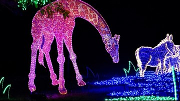 What's new this year at Houston Zoo Lights