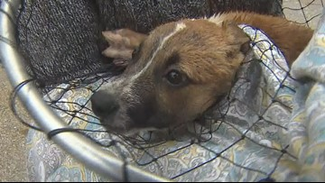 Heroes rescue puppies from storm drain in north Houston