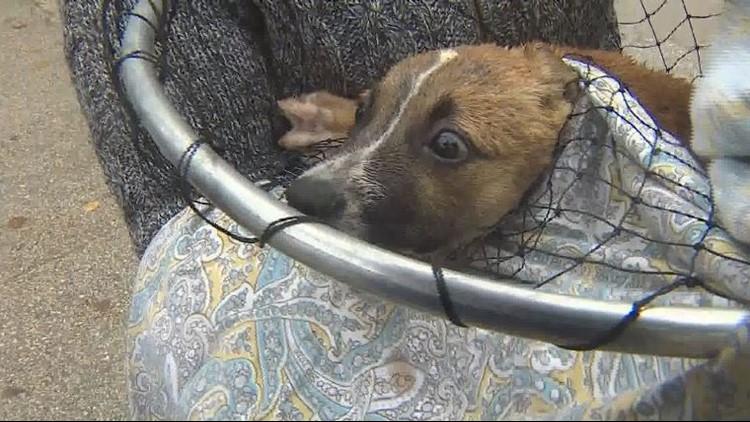 puppy rescue (10)_1542066315565.JPG.jpg