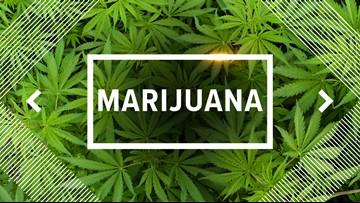 San Antonio state senator files medical marijuana bill for Texas