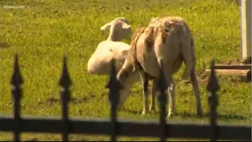 Pearland residents fight to keep slaughterhouse out of community