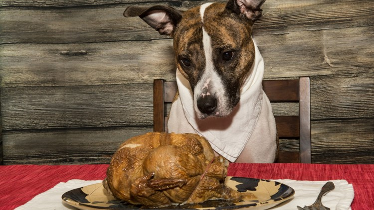 Just leftovers? Maybe not. Some foods pose surprise dangers to dogs.