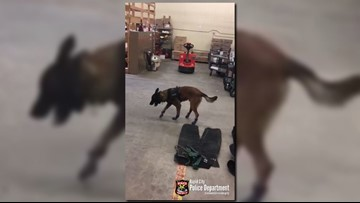 WATCH: Police K-9 tries on snow boots, and it's adorable