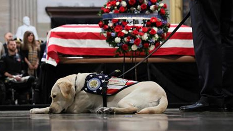 Sully the service dog prepares to embark on a new adventure after Christmas