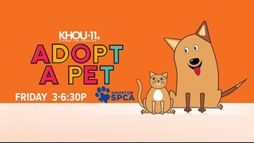 Make a difference on Adopt A Pet Day at the Houston SPCA