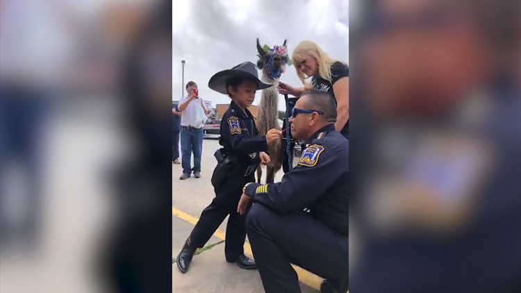 Video: Officer Abigail by Freeport PD chief's side as he kisses a llama after losing a bet