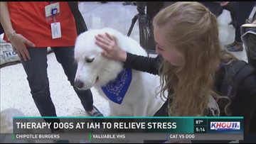 New therapy dog program launches at Bush Airport   khou com
