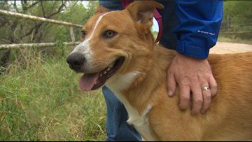Dog rescued by KHOU 11 engineer now getting some TLC at Houston SPCA