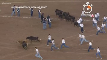 HTown60: RodeoHouston's calf scramble