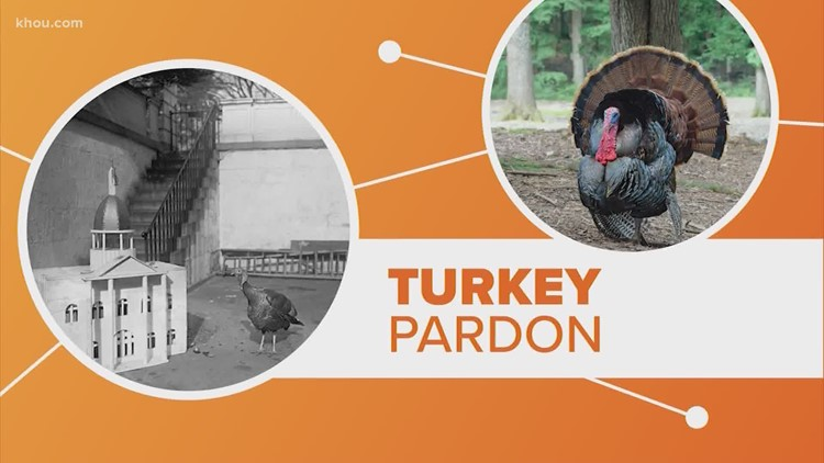 History of turkey pardoning at the White House | Connect the Dots