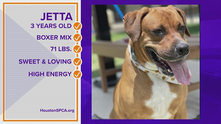 Pawfect Match: Meet Jetta! She's a 3-year-old boxer mix