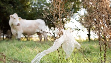 Plastic bags are killing cows and horses across Texas