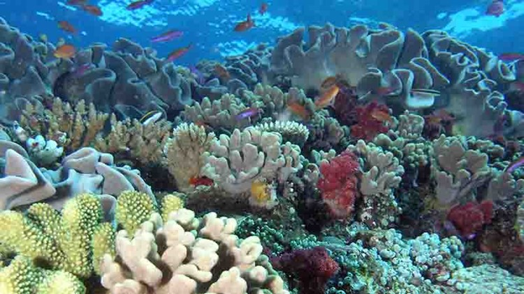 Hawaii's coral reefs threatened by global warming's extreme rains