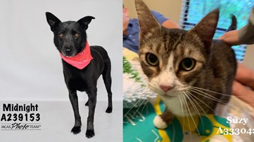 Nearly 200 animals at Montgomery County Animal Shelter need your help