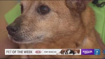 Pet of the Week: Meet Barry