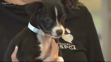 Pet of the Week: Meet Horace