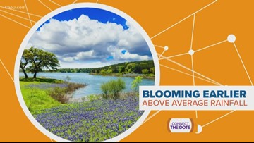 CONNECT THE DOTS: Why are bluebonnets popping up so early?