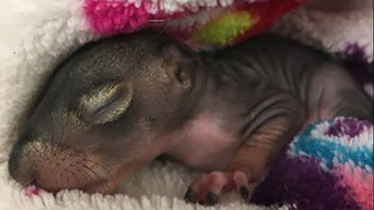 Tiniest storm victims: Baby animals rescued after getting blown out of their nests by Nicholas
