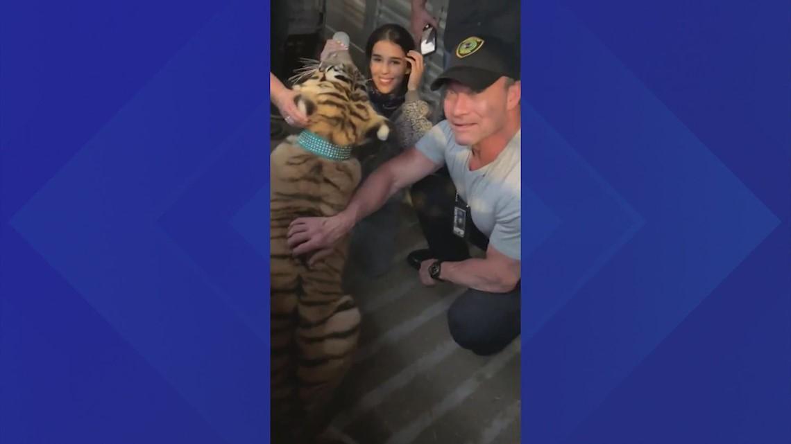 Houston Police: India the tiger found safe
