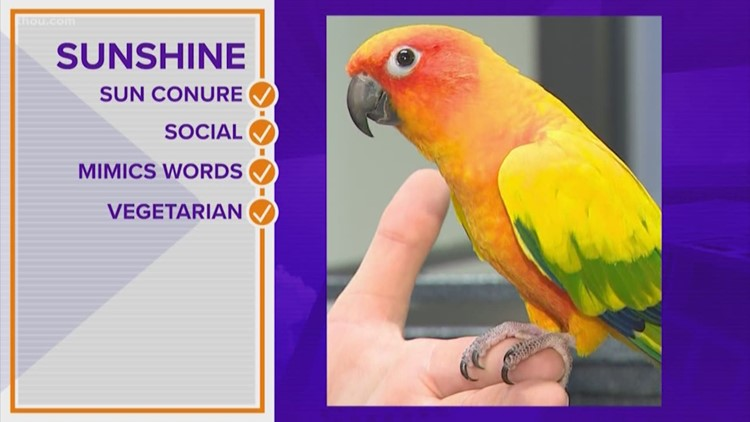 PAWfect match: Sunshine wants to be your feathered friend