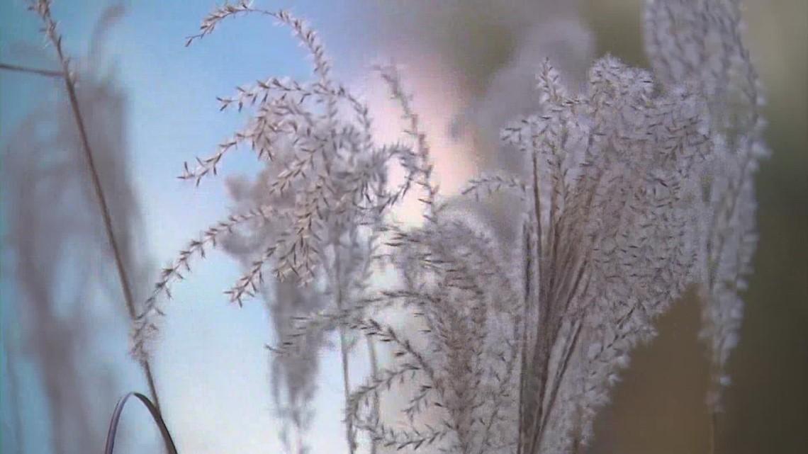 Moment of Zen: Sugar Land's Oyster Creek Park