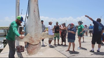 Tiger shark caught at Texas City Dike fishing tournament
