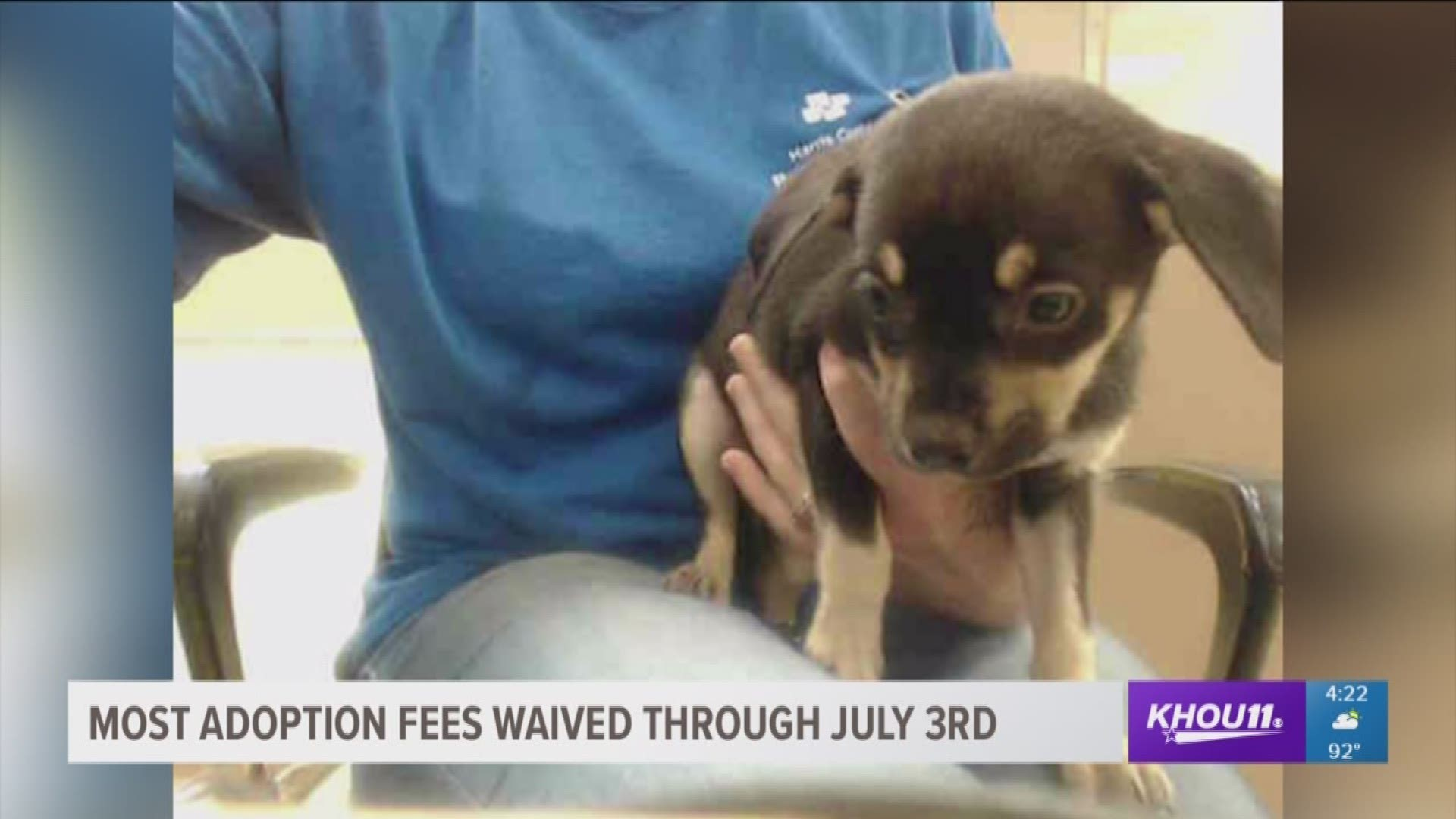 Free Pet Adoptions At The Harris County Animal Shelter Until July 3 Khou Com