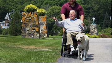 Sully, Bush 41's service dog, to start working with veterans later this month
