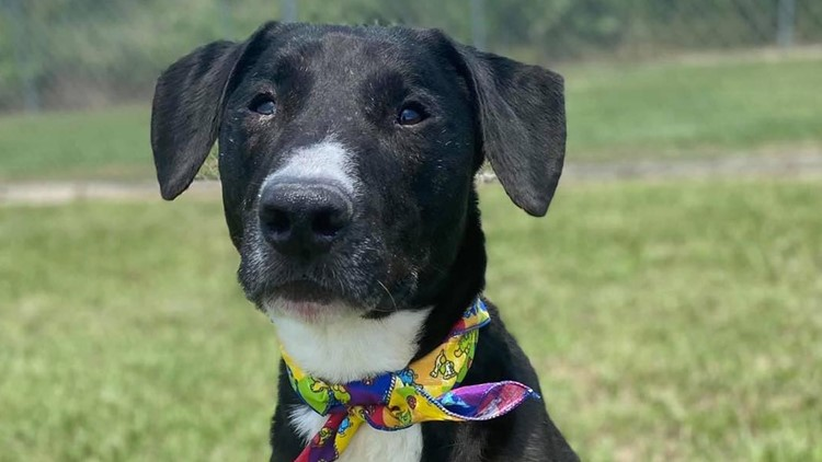 Montgomery County Animal Shelter at 'critical capacity' and has taken in 660 animals in just two weeks