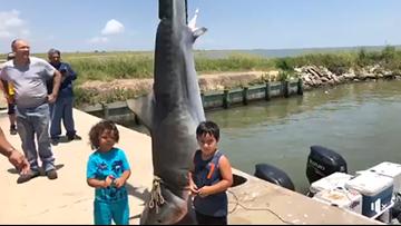 Tiger shark caught at Texas City-La Marque fishing tournament