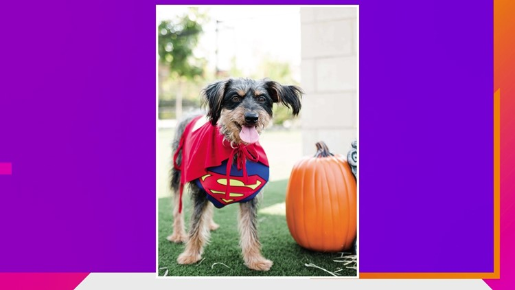 Houston SPCA's Pet Costume Ideas and Howl-O-Ween Ball