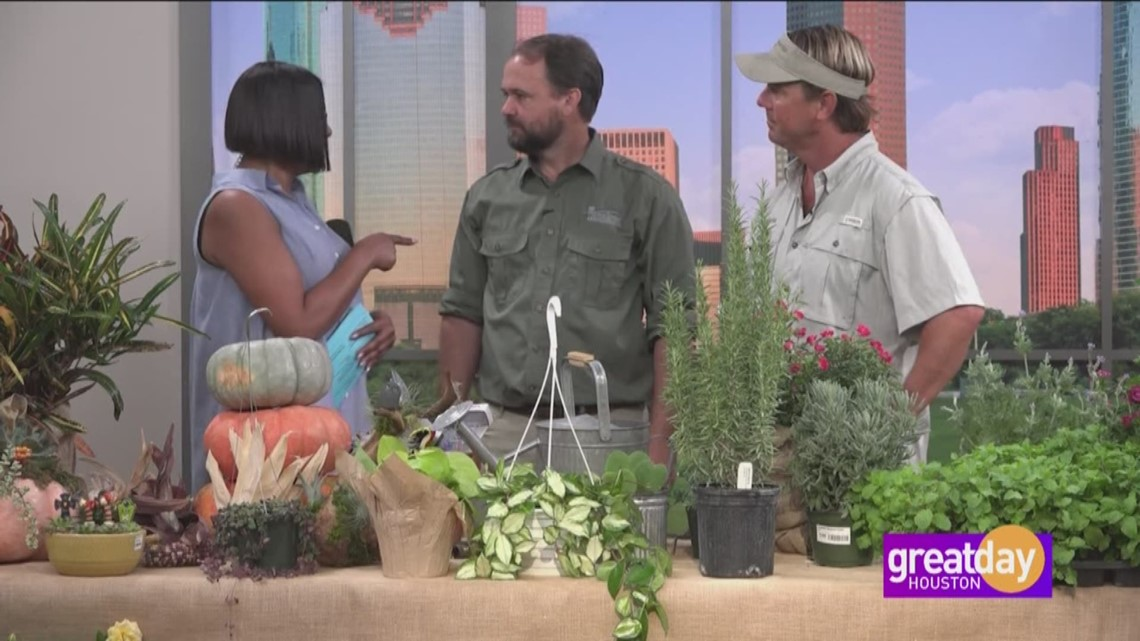 Great Day's Gardening Show explores what to plant right now