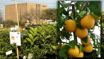 'Largest fruit tree sale' in the country is coming to Houston