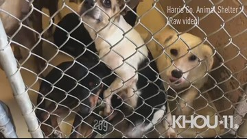 Raw: Animals in need of homes at the Harris County Animal Shelter | Adoptions just $10