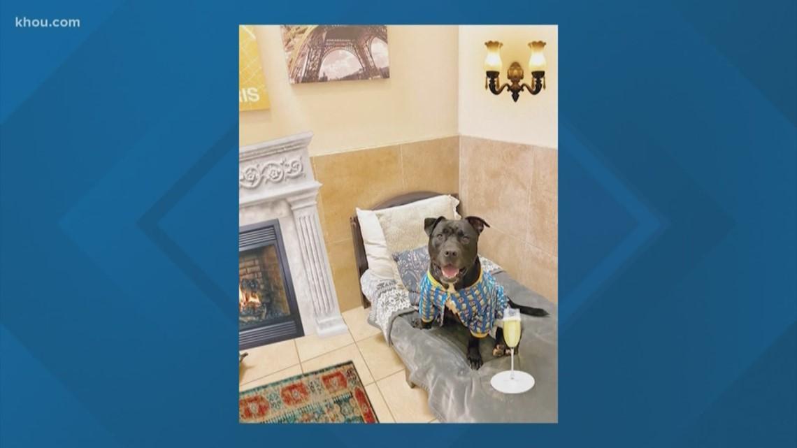 Luxury pup resort takes in shelter dogs during coronavirus emergency