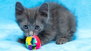 Kittens in Houston looking for their fur-ever homes