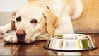 Recall on pet food suspected in 70 deaths has been expanded