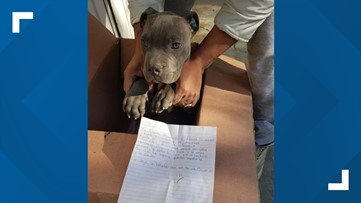 Boy leaves puppy at shelter with note describing father's abuse