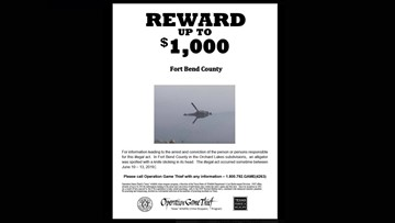 $1,000 reward offered in case of alligator with knife in head in Fort Bend