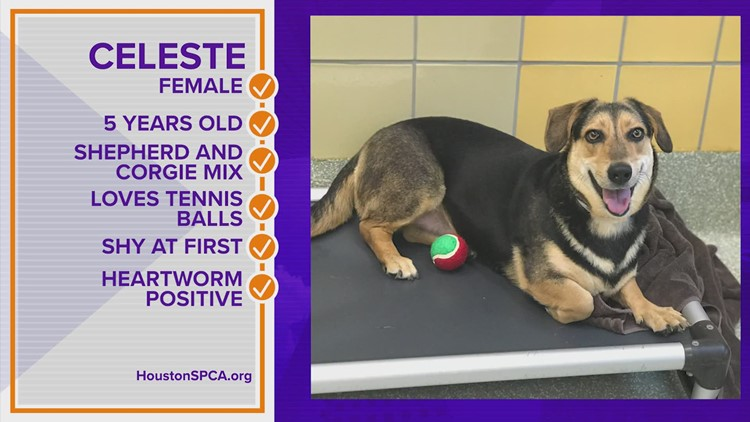 Pawfect Match: Meet Celeste!