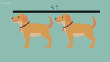 As you social distance, here are examples to help estimate how far away 6 feet is