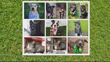 Looking for a new pet? BARC celebrating National Adopt A Shelter Pet Day with $5 adoption fees
