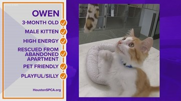Pawfect Match: Meet Owen