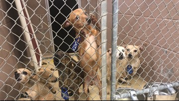 Harris Co. Animal Shelter takes in 17 small dogs dumped near the Grand Parkway