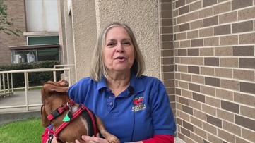 Volunteers, dogs surprise healthcare workers at Clear Lake hospital
