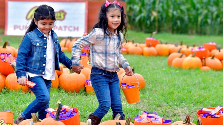 List: Pumpkin patches in the Greater Houston area