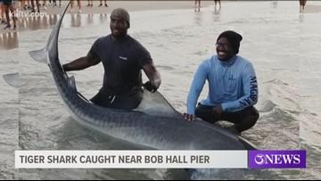 11-foot tiger shark caught near Bob Hall Pier on Padre Island
