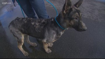 Dog missing for 5 months found due to Snohomish deputy's intuition